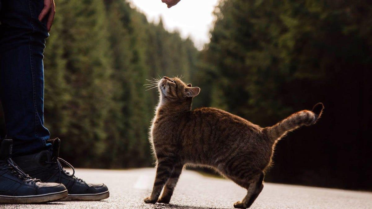 Le contagia de peste neumónica su propio gato