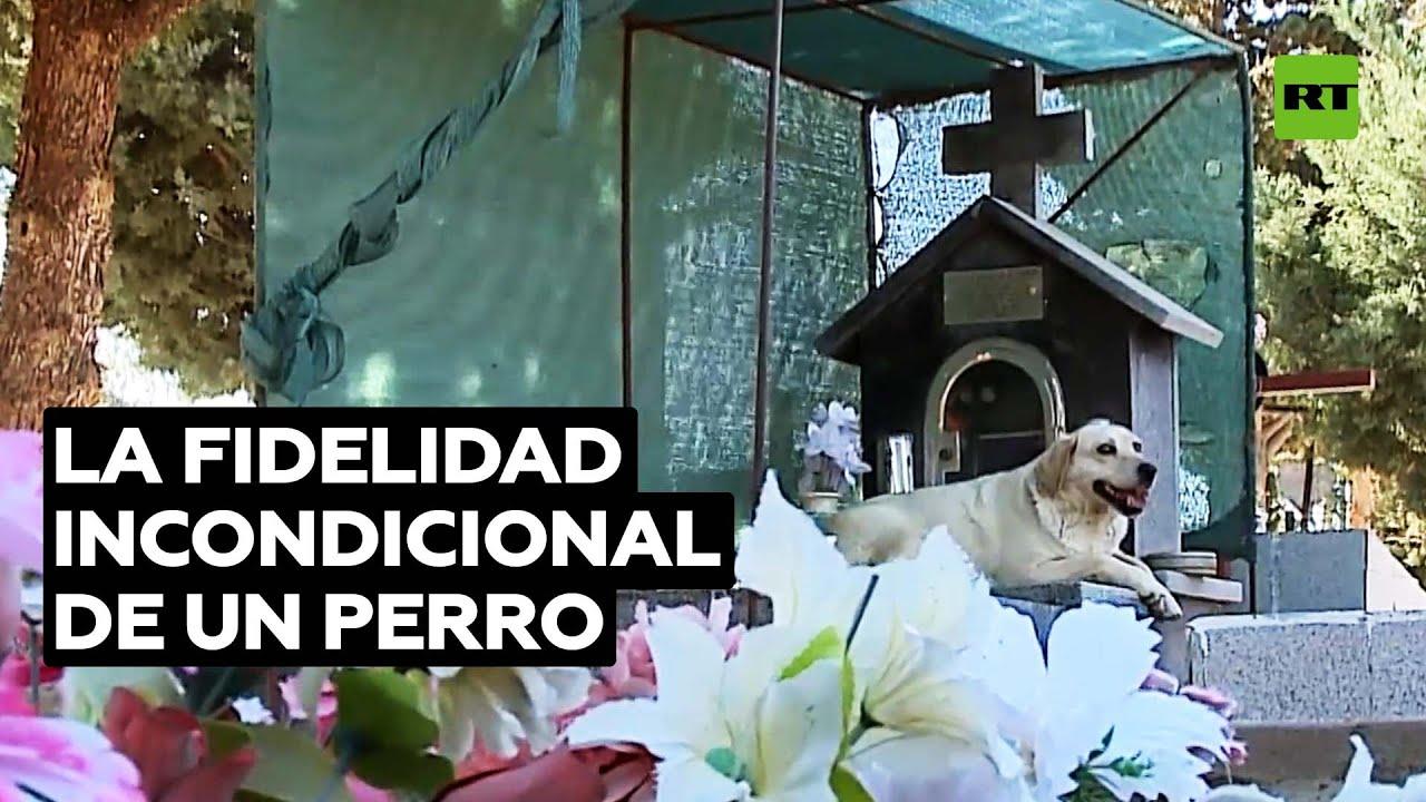Perro argentino no abandona la tumba de su dueño desde hace tres años @RT Play en Español
