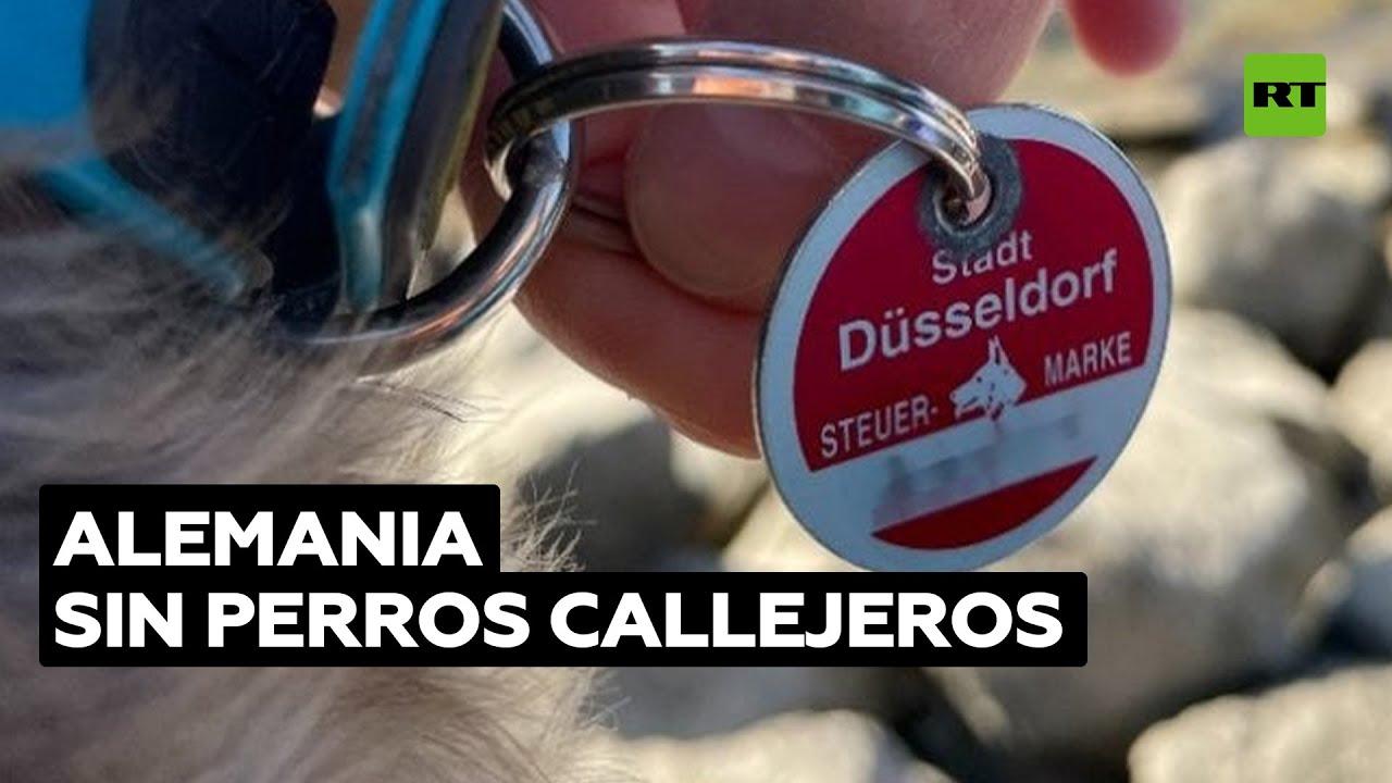 ¿Por qué no hay perros abandonados en Alemania? @RT Play en Español