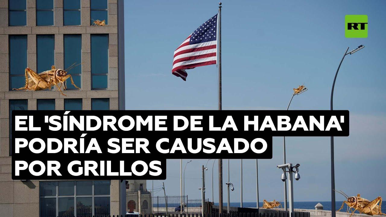 Un informe desclasificado de EE.UU. dice que los grillos serían la causa del 'síndrome de La Habana'