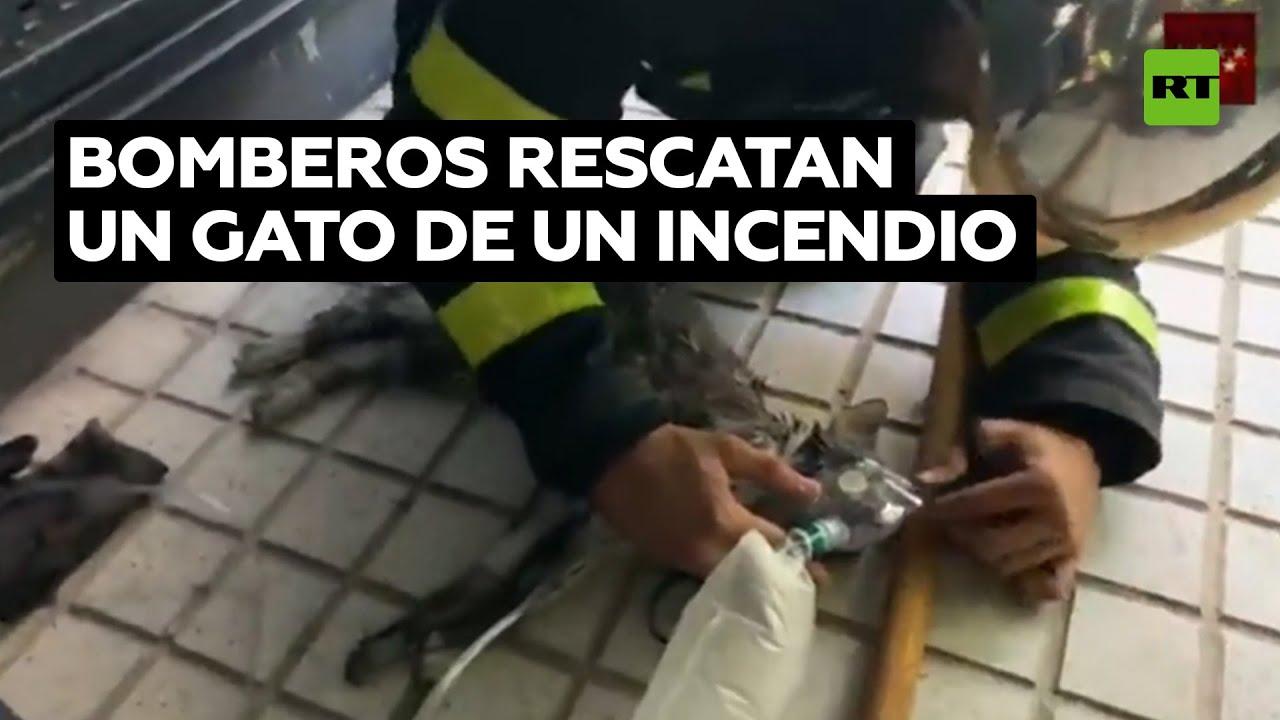 Los bomberos salvan la vida de un gato al darle ventilación asistida