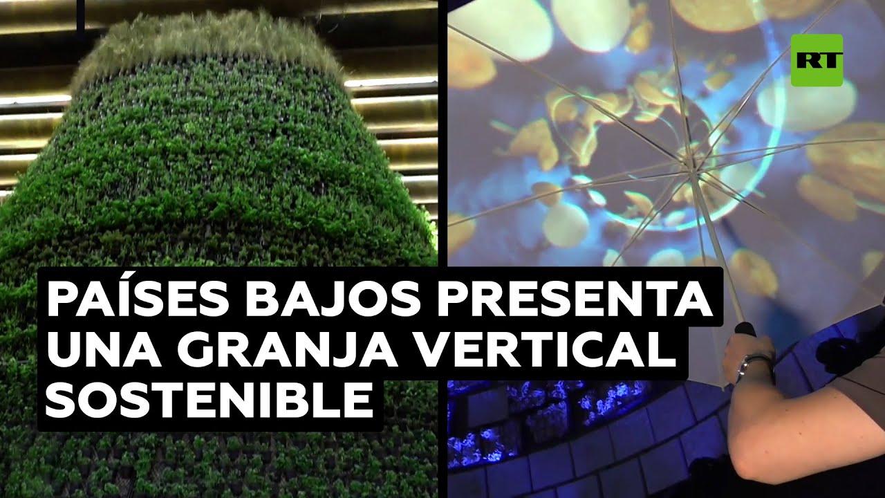 Países Bajos presenta una ambiciosa granja vertical sostenible en la Expo 2020 @RT Play en Español