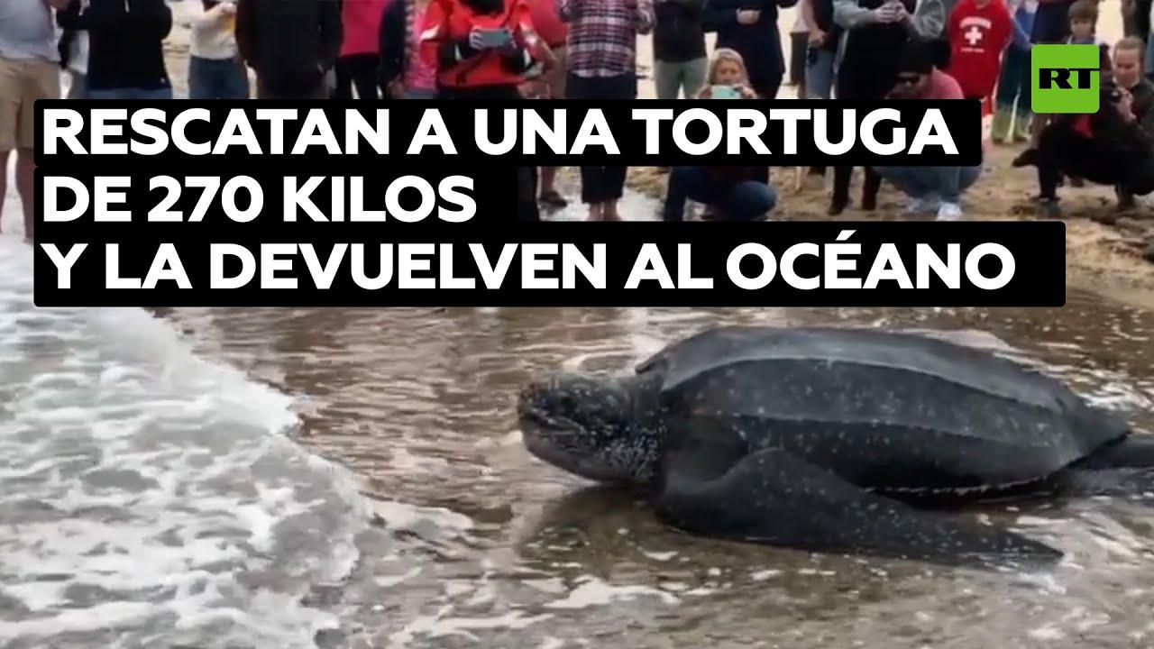 Rescatan a una tortuga 270 kilos y la devuelven al océano