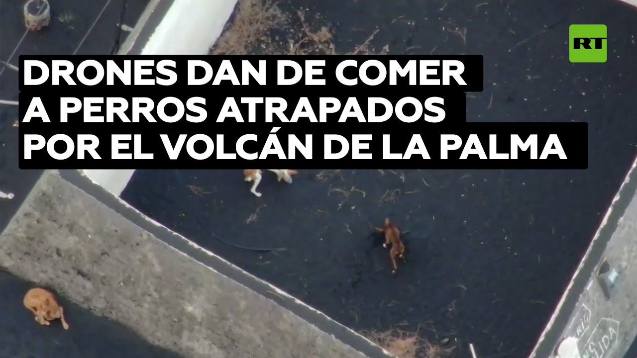 Drones dan de comer a perros atrapados por la erupción del volcán de La Palma