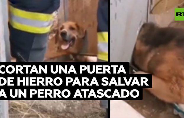 Un perro atascado en una puerta de hierro es rescatado por bomberos