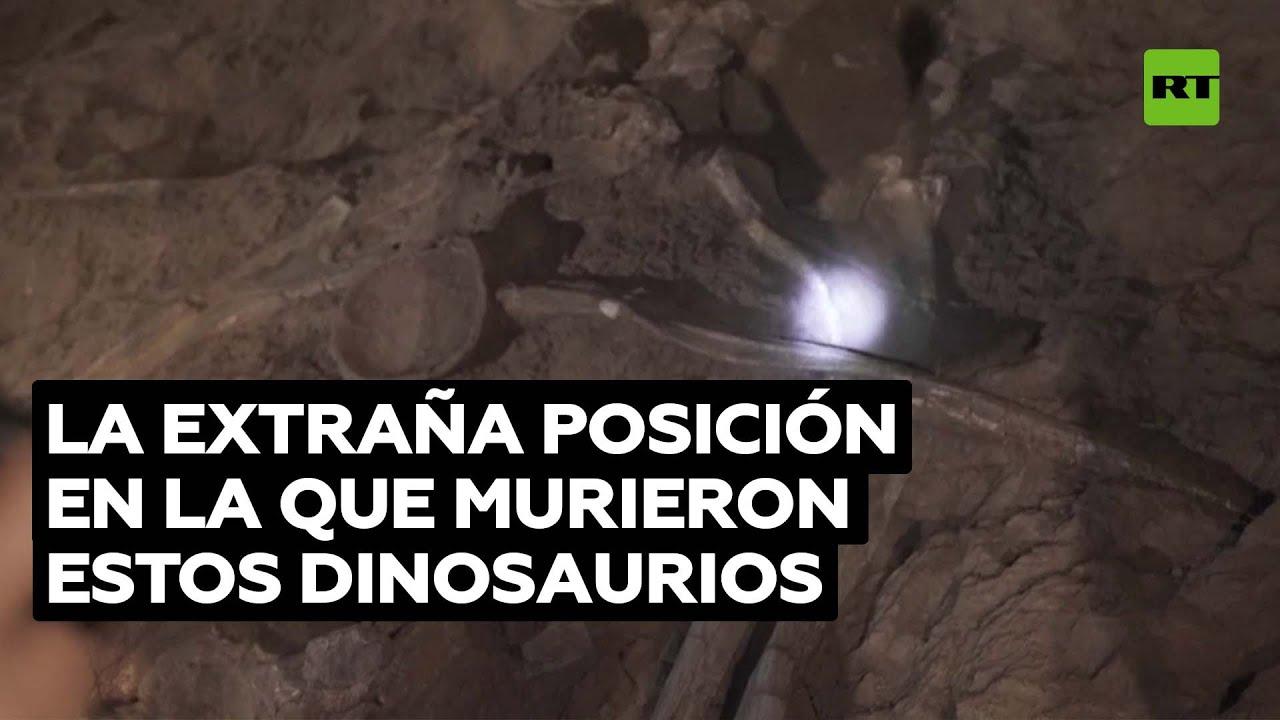 Misterio para los científicos: hallan fósiles de dinosaurios con las cabezas giradas hacia el este