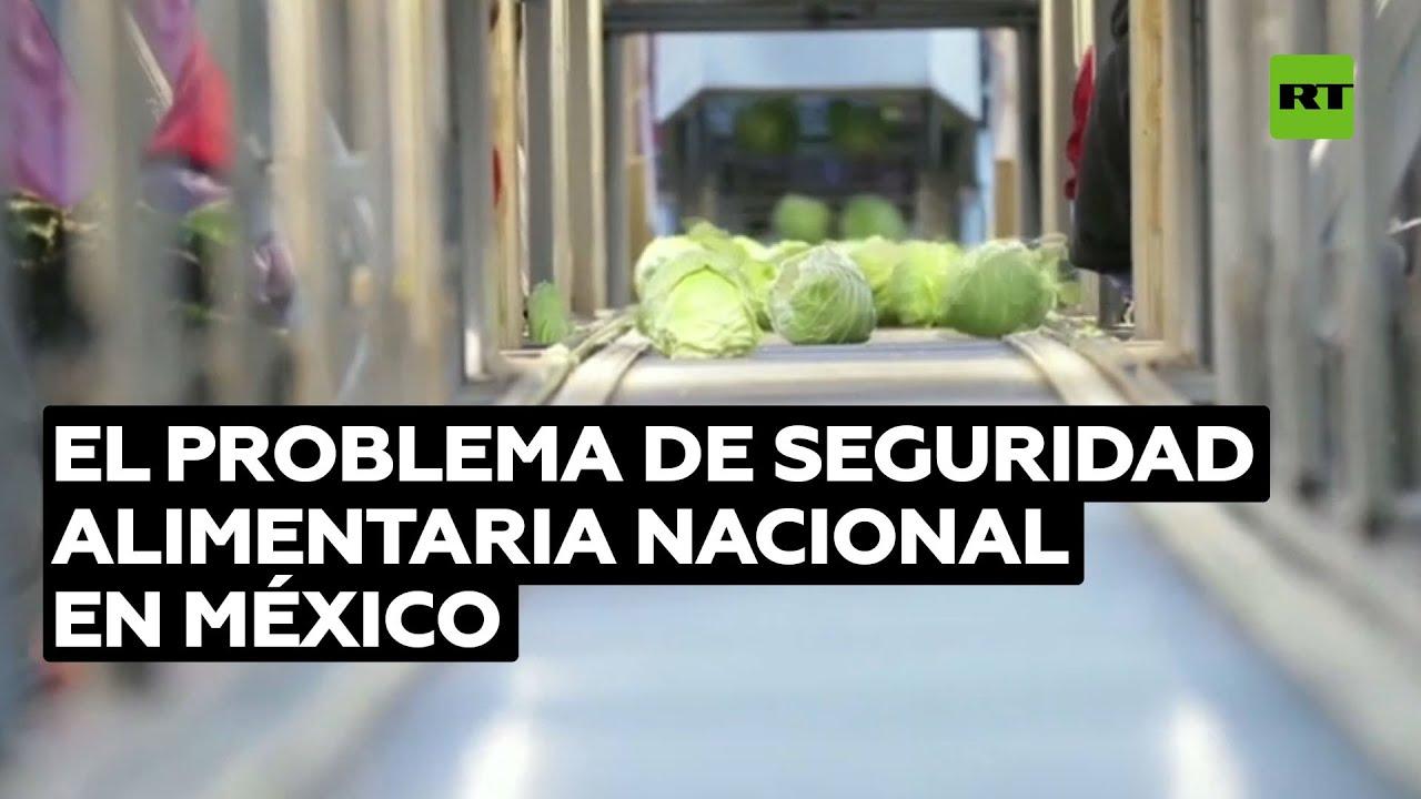 """México padece de una """"crisis estructural"""" agrícola por causa del cambio climático"""