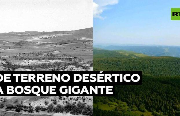 China convierte una tierra estéril en un bosque gigantesco @RT Play en Español