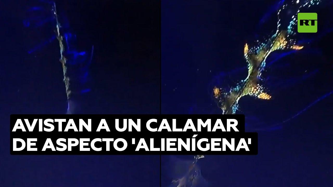 Captan a un calamar de aspecto insólito en las profundidades del océano @RT Play en Español