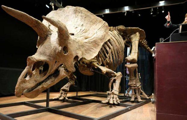 El esqueleto del Triceratops más grande se vende por 7,7 mill.