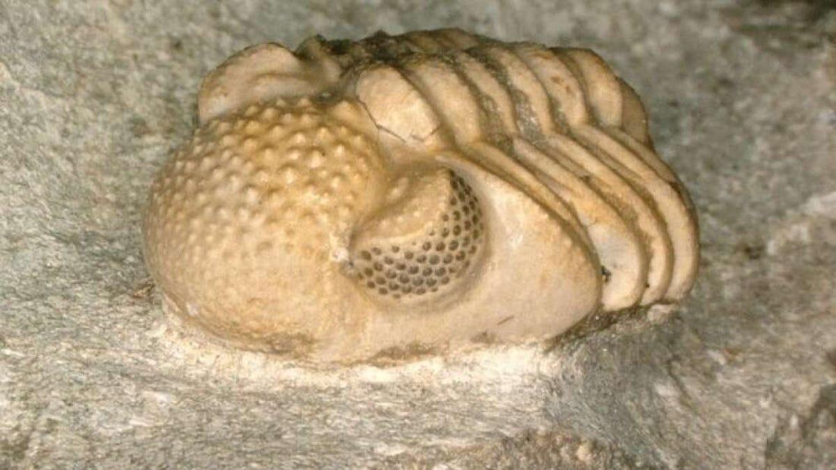 Una criatura de hace 390 millones de años tenía cientos de ojos