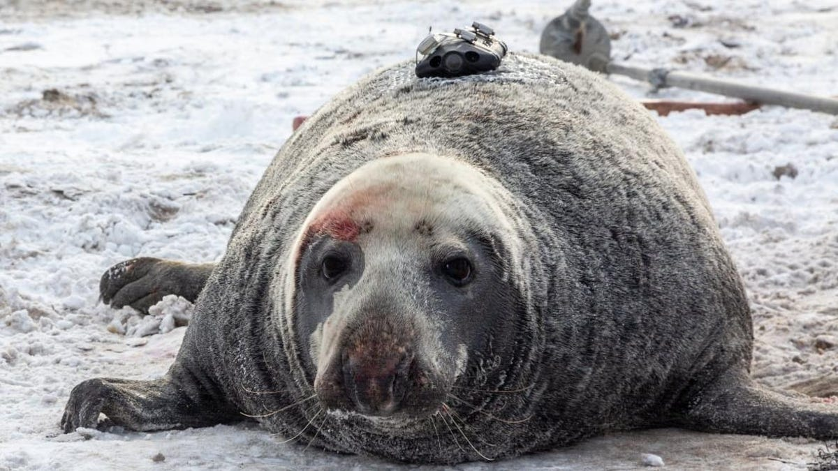 Unos pescadores encuentran en el fondo del océano una cámara que se desprendió de una foca en 2018