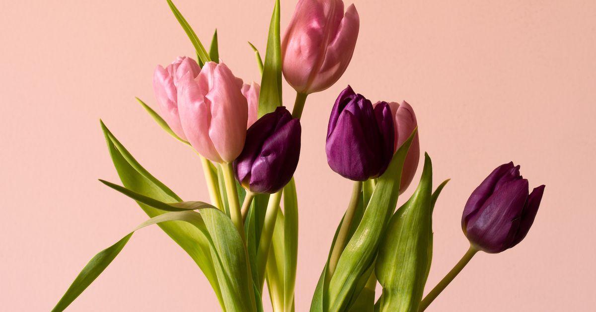 El agregador de rendimiento basado en solana Tulip recauda $ 5 millones