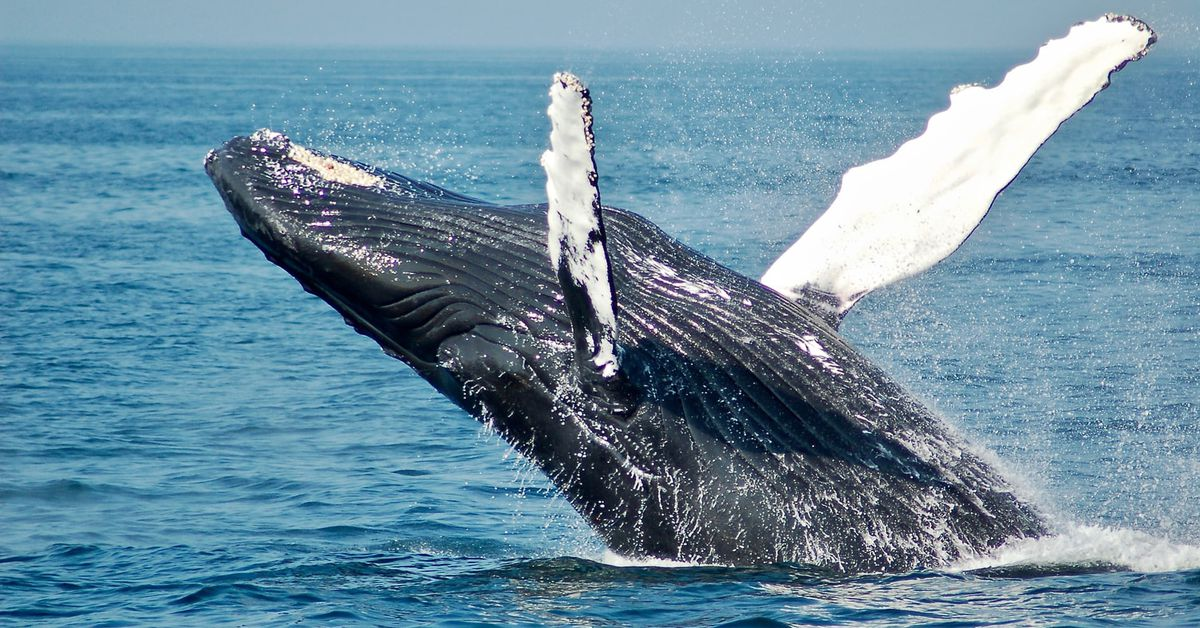 'Coinbase Premium' indica que las 'ballenas' en Binance pueden estar detrás del rally de Bitcoin – CoinDesk