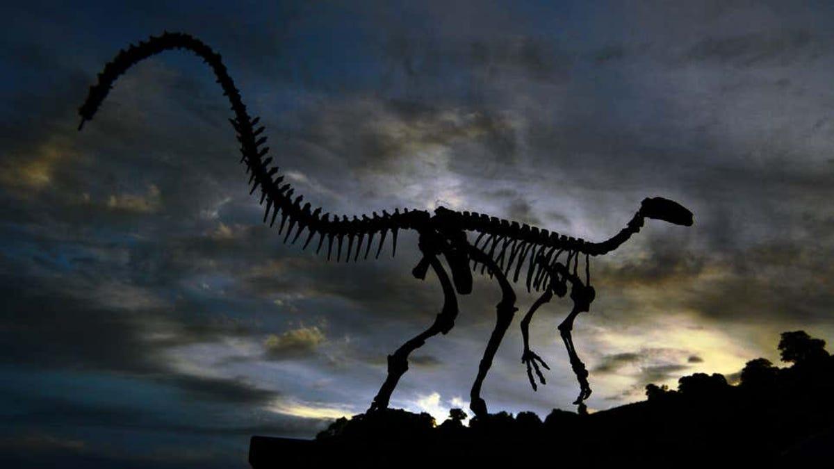 Científicos creen haber encontrado ADN de dinosaurio fosilizado