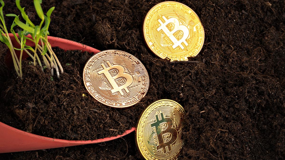 Bróker argentino contribuye a una industria bitcoin más verde reduciendo huella de carbono