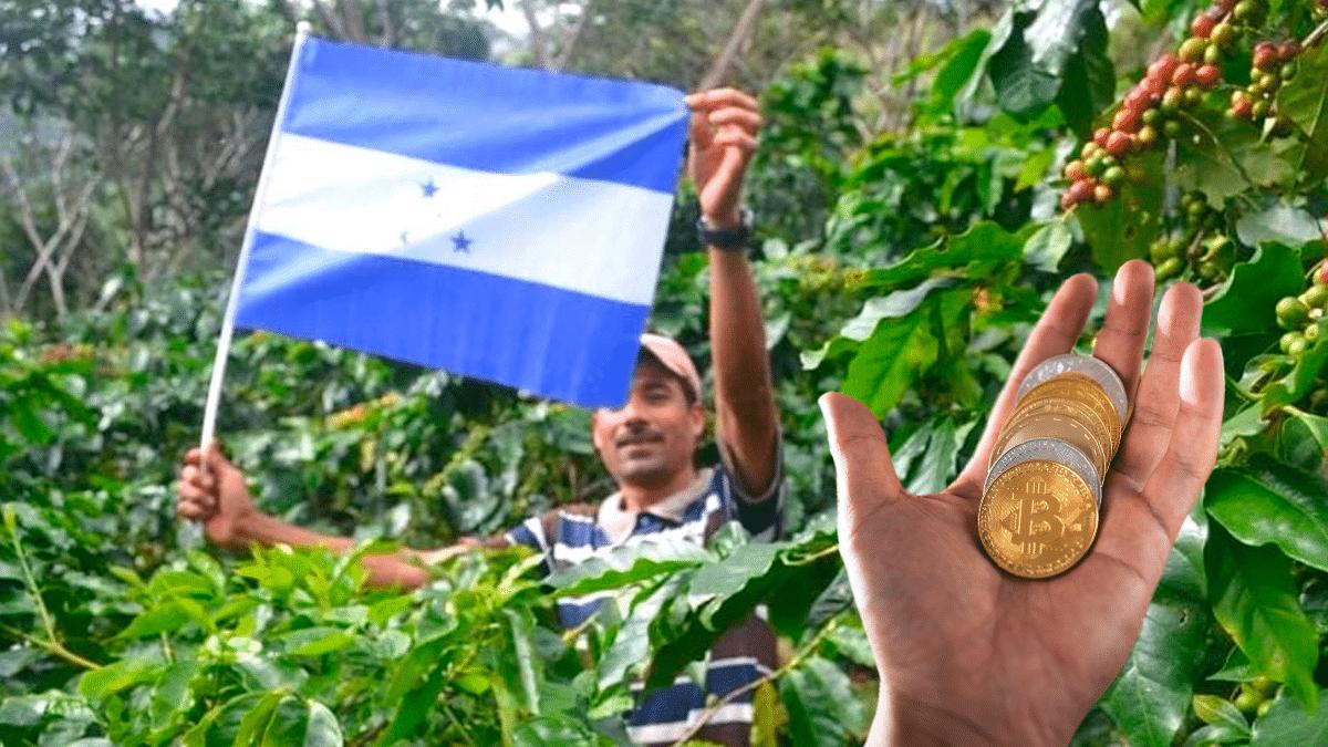 Agricultores en Honduras podrán acceder a créditos con criptomonedas